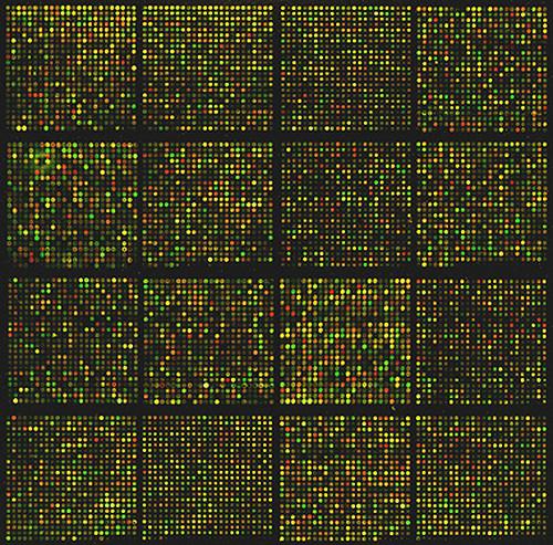 Un microarray, tecnica basata sulla fluorescenza che può essere utilizzata per individuare SNPs. (AV-0101-5194 Dr. Jason Kang, NCI, Flikr)