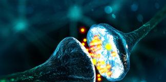 sinapsi