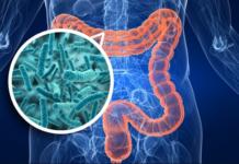 Microbiota e sclerosi multipla: scoperta possibile correlazione
