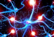 Privazione di sonno: effetti sulla comunicazione neuronale
