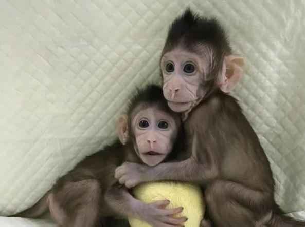 scimmie